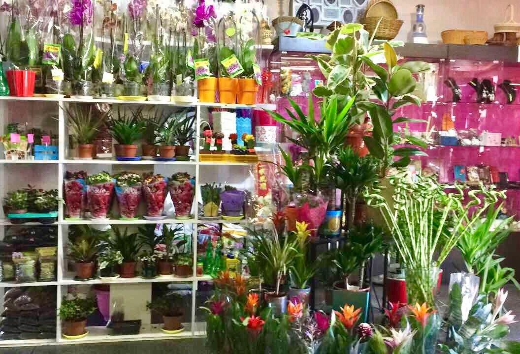 горшечные комнатные цветы пангоды